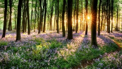 Your voice and your vote: Which rewilding project will you choose?
